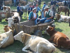 Horse and Cattle Market