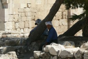 Amman - resting under shade trees