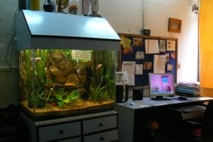 Humsafar drop-in center office. Aquariums are very popular decorations in