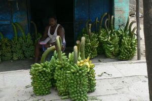 Chennai - banana vendor;  a great number of Indians earn