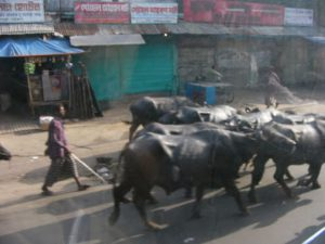 From Chittagong to Cox's Bazar -