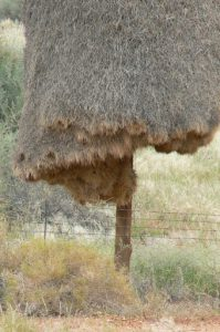 Bird nests are entered from below