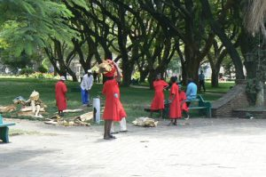 Harare: downtown central park ladies picking up firewood from a