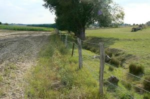 A ditch along the St Juvin-St George road. An old