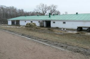 Tolstoy was very interested in farming and peasant life. Here