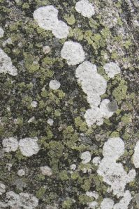 Portugal, Evora: moss and lichen on a standing stone